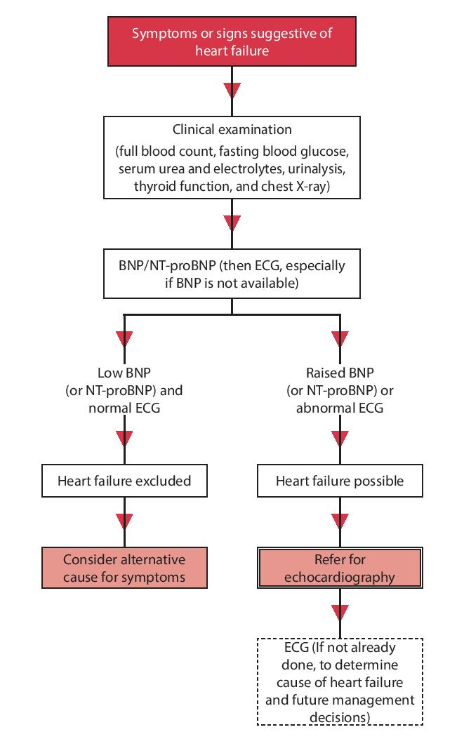 Diagnostic algorithm for patients with suspected chronic heart failure