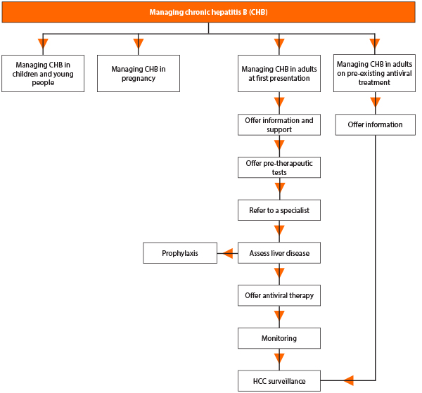 chronic hepatitis B management pathway